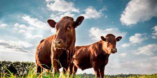 Biden's Plan Could Limit Meat Consumption for Americans