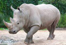 How Did Biden Make A Rhino Disappear?